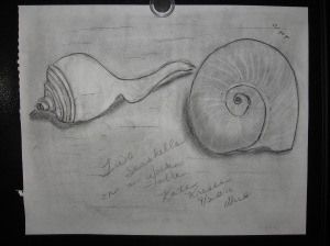 Curvy Shells from St. Croix, U.S. Virgin Islands
