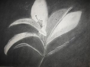 Rubrim Lily Sketch