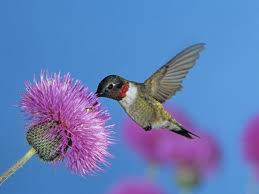 We, like the dear hummingbird, need sustenance.