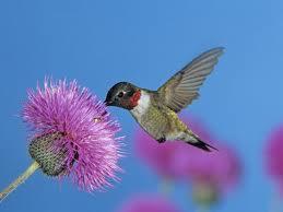 We, like the dear hummingbird, need sustenance.